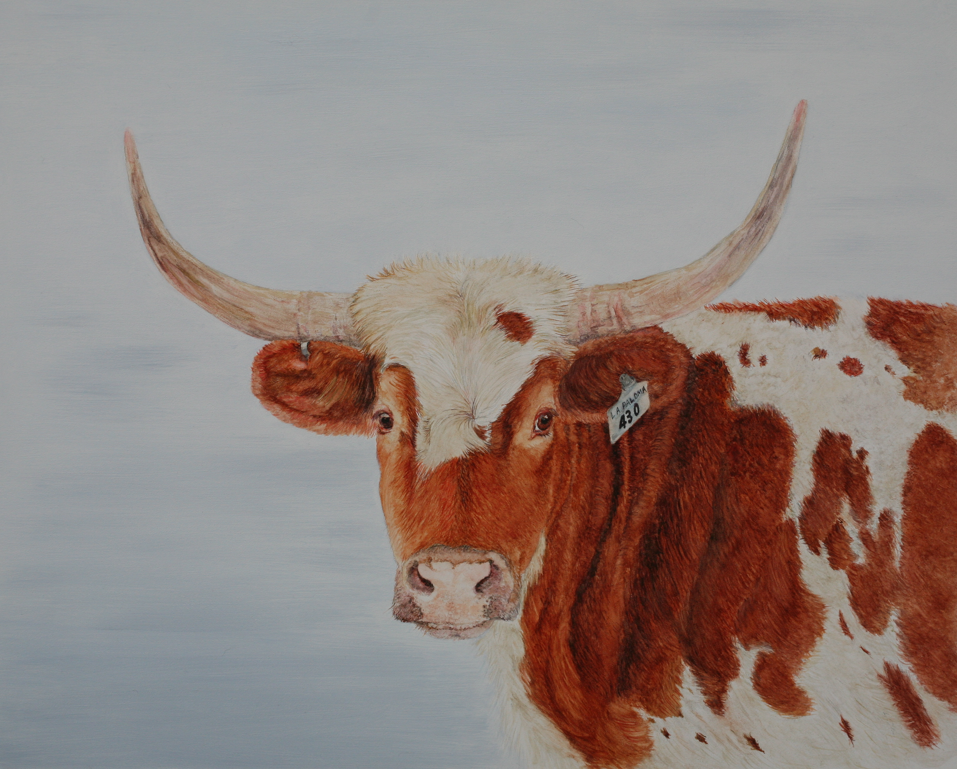 Watercolor Oil And Acrylic Paintings Of Cows By Dana