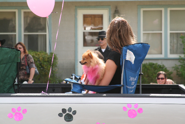 Our Pom Muffy always loved the parade