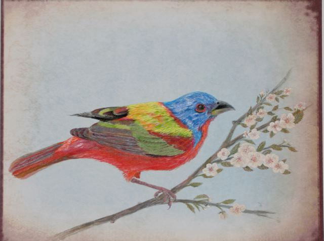 Painted Bunting and Apple Blossoms - Acrylic