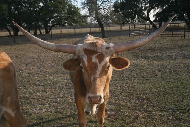 Got Cattle Cubes?