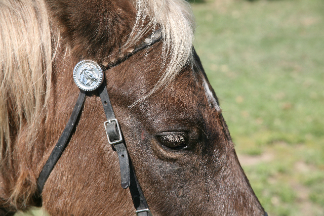 my bridle