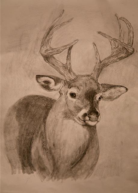 whitetail deer � mas o menos