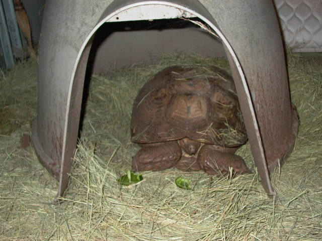 Fast Eddie in his igloo